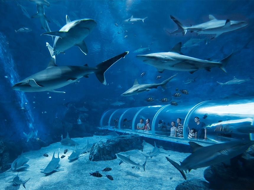 Создание подводного мира в аквариуме